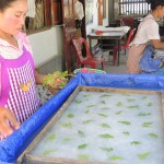 Faire Welt - making Saa papier with plants